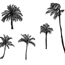 5 Palm Tree Drawing (PNG Transparent)