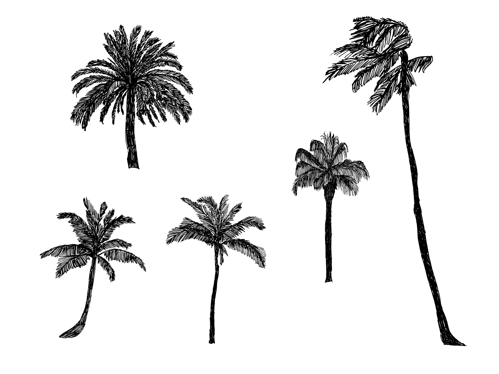 5-palm-tree-drawing-cover.png