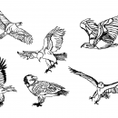 6 Eagle Drawing (PNG Transparent)