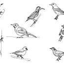 8 Bird Drawing (PNG Transparent)