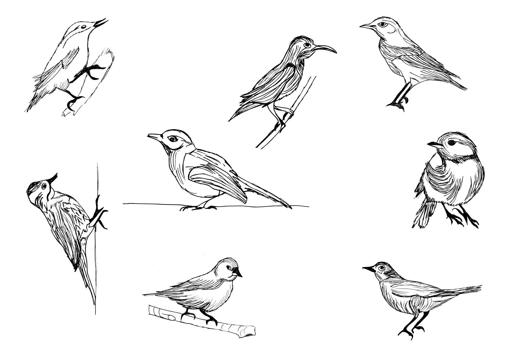 8-bird-drawing-cover.png