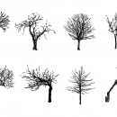 8 Tree Drawing (PNG Transparent)