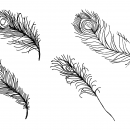 4 Peacock Feather Drawing (PNG Transparent)