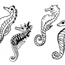 4 Seahorse Drawing (PNG Transparent)