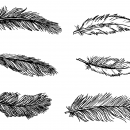 6 Feather Drawing (PNG Transparent)