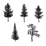 5 Pine Tree Silhouette Drawing (PNG Transparent)