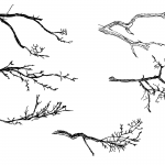 6 Tree Branch Drawing (PNG Transparent)