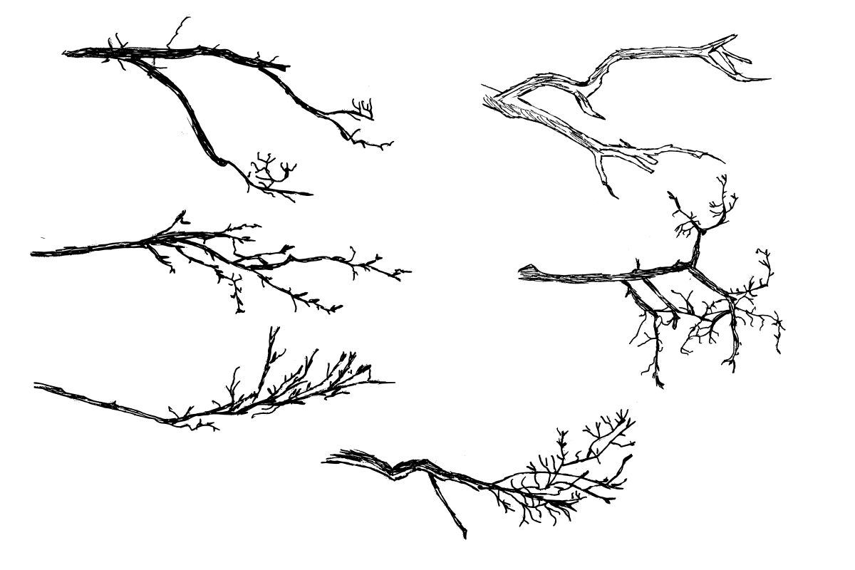 6 Tree Branch Drawing Png Transparent Onlygfx Com