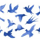 13 Watercolor Bird Silhouette (PNG Transparent)