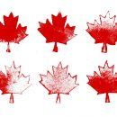 6 Grunge Maple Leaf (PNG Transparent)