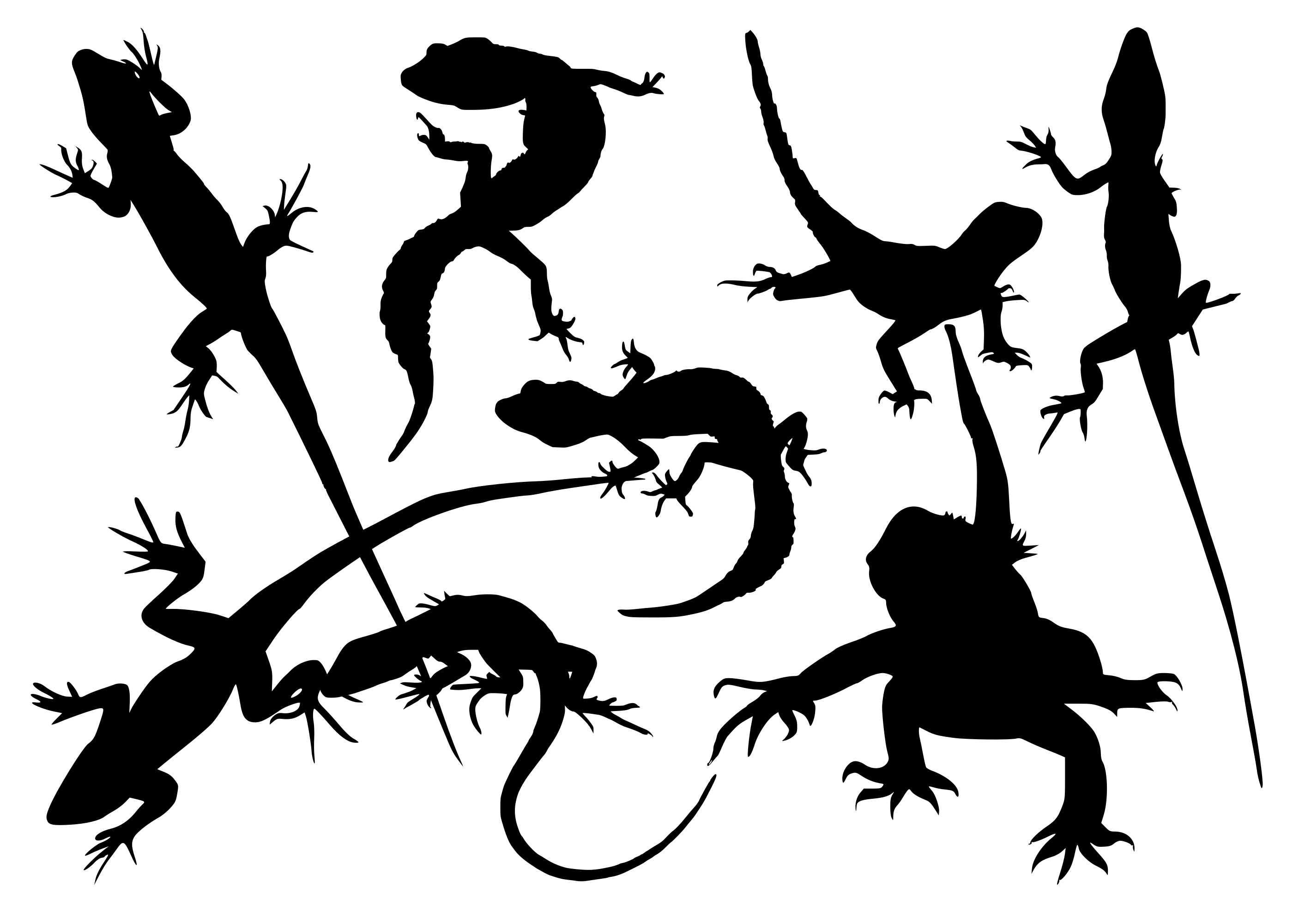 8-lizard-silhouette-cover.jpg
