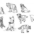 8 Dog Drawing (PNG Transparent)