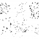8 Flock Of Birds Silhouette (PNG Transparent)