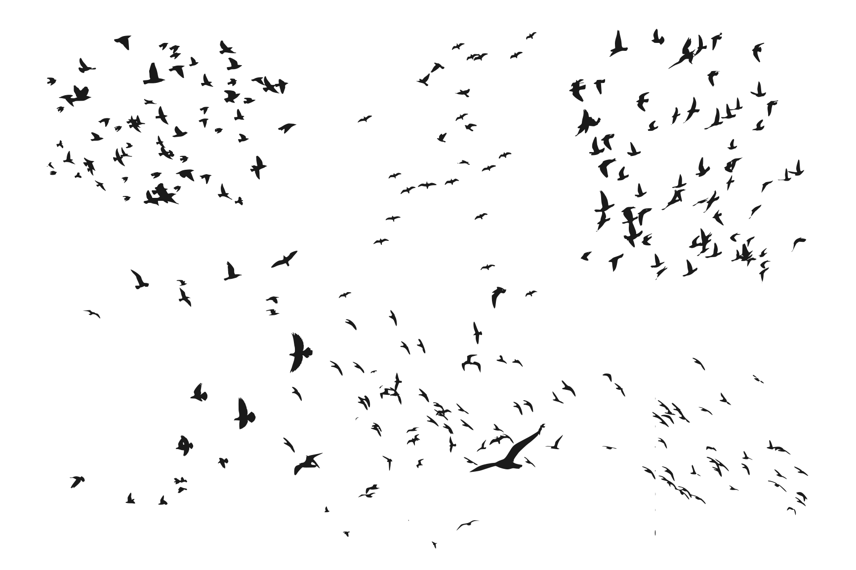 8-flock-of-birds-silhouette-cover.png