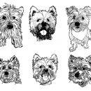 6 Westies Dog Drawing (PNG Transparent)