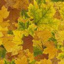 4 Maple Leaf Pattern Tile Background (PNG Transparent)