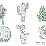 6 Cactus Drawing Vector (EPS, SVG, PNG Transparent)