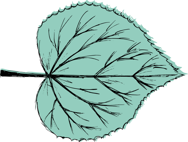 leaf-drawing-vector-0.png