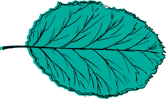 leaf-drawing-vector-4.png