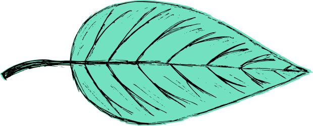 leaf-drawing-vector-5.png