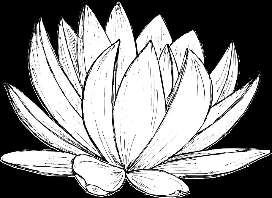 lotus-drawing-1.png