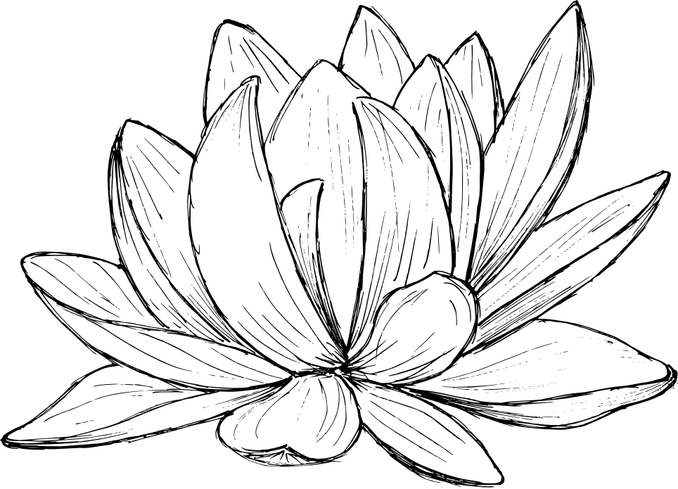 lotus-drawing-2.png