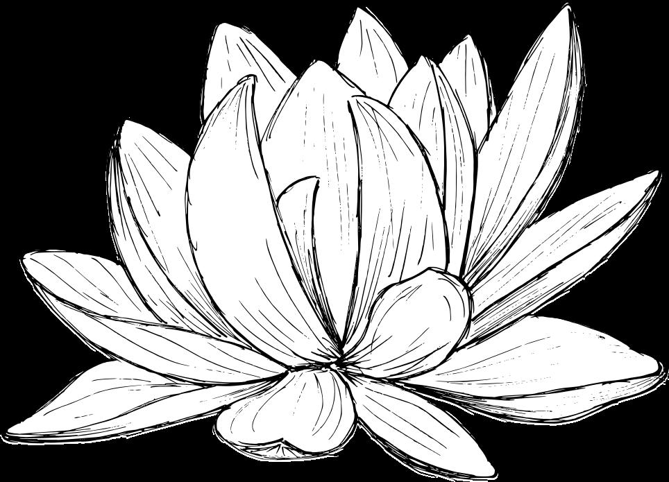 lotus-drawing-2.png