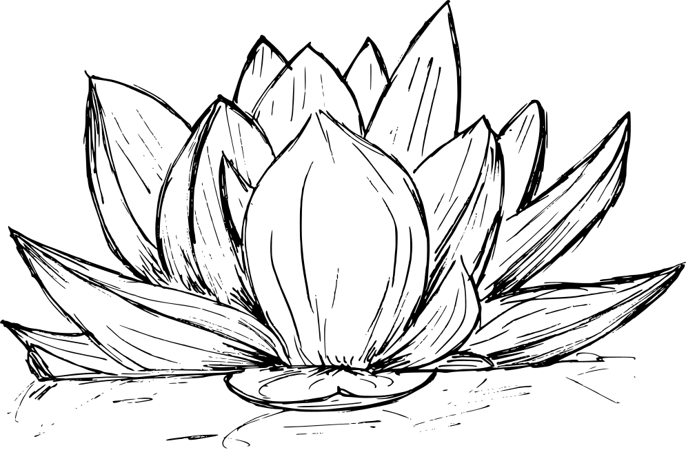 lotus-drawing-3.png