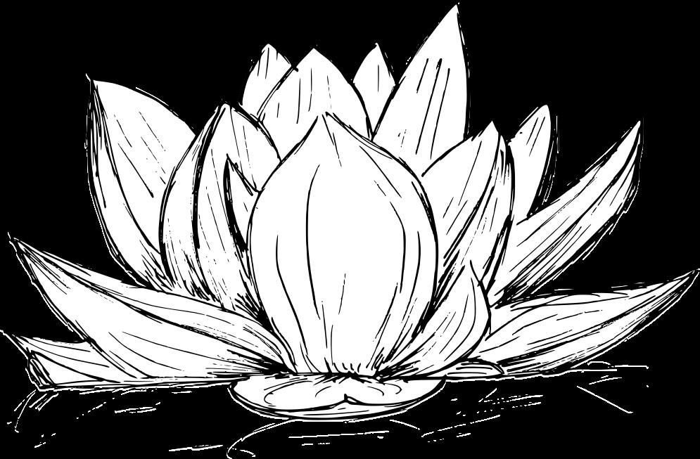 lotus-drawing-3.png