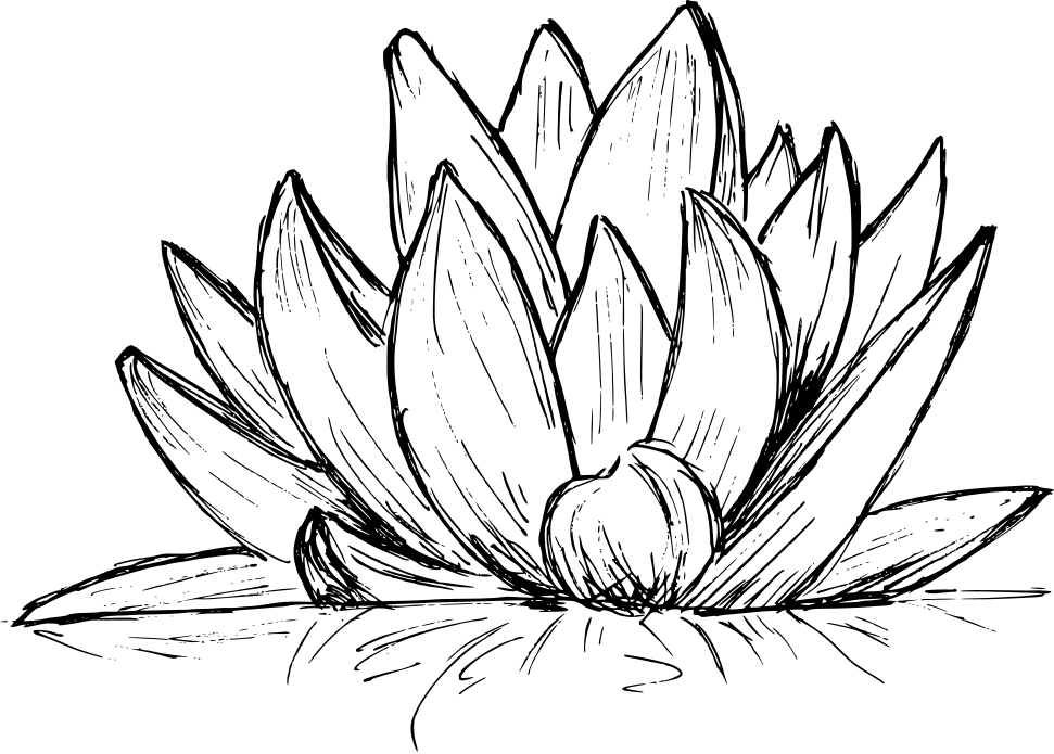 lotus-drawing-4.png