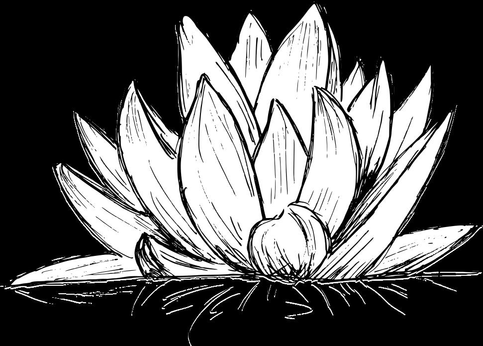 lotus-drawing-4.png