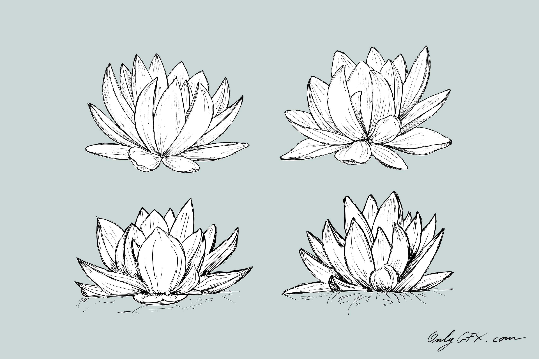 lotus-drawing-cover.jpg