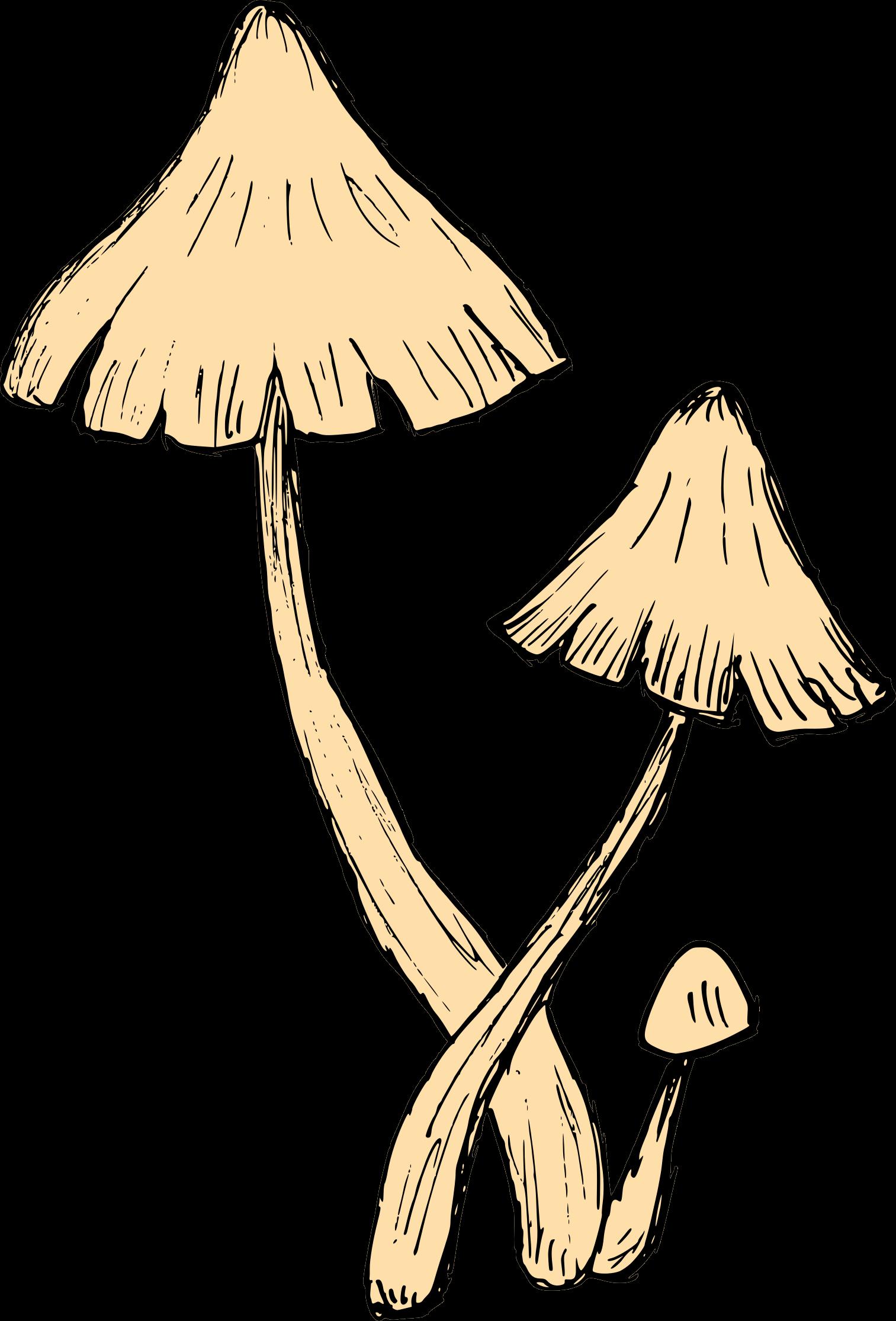 mushroom-drawing-6.png
