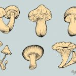 Mushroom Drawing Vector (EPS, SVG, PNG Transparent)