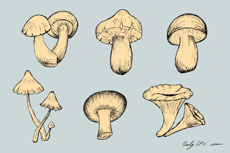 mushroom-drawing-cover.jpg