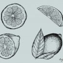 Lemon Drawing Vector (EPS, SVG, PNG Transparent)