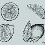 Lemon Drawing Vector (EPS, SVG, PNG Transparent)