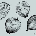 Onion Drawing Vector (EPS, SVG, PNG Transparent)
