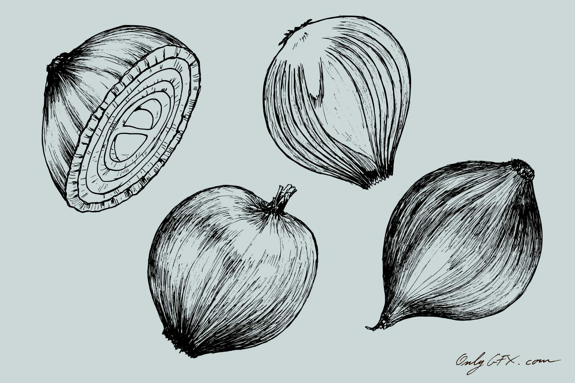 onion-drawing-cover.jpg