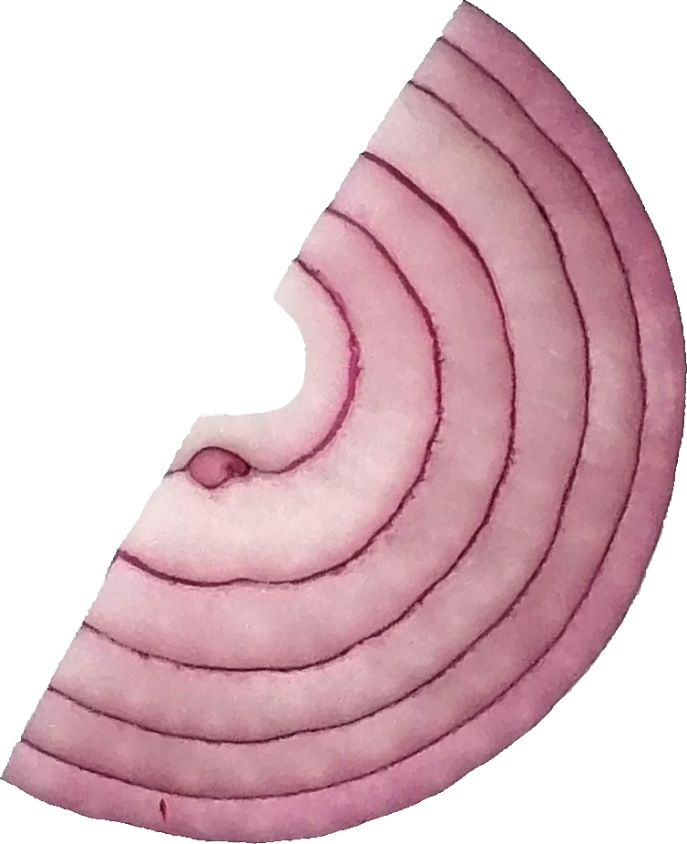 sliced-onion-4.png