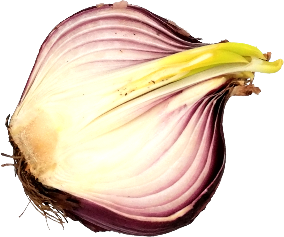 sliced-onion-6.png