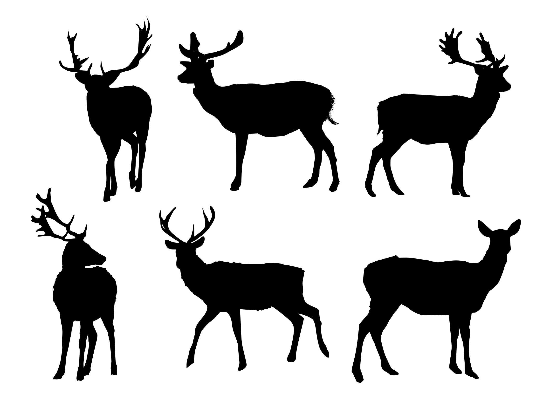 deer-silhouette-cover.jpg