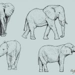 Elephant Drawing Vector (EPS, SVG, PNG Transparent)