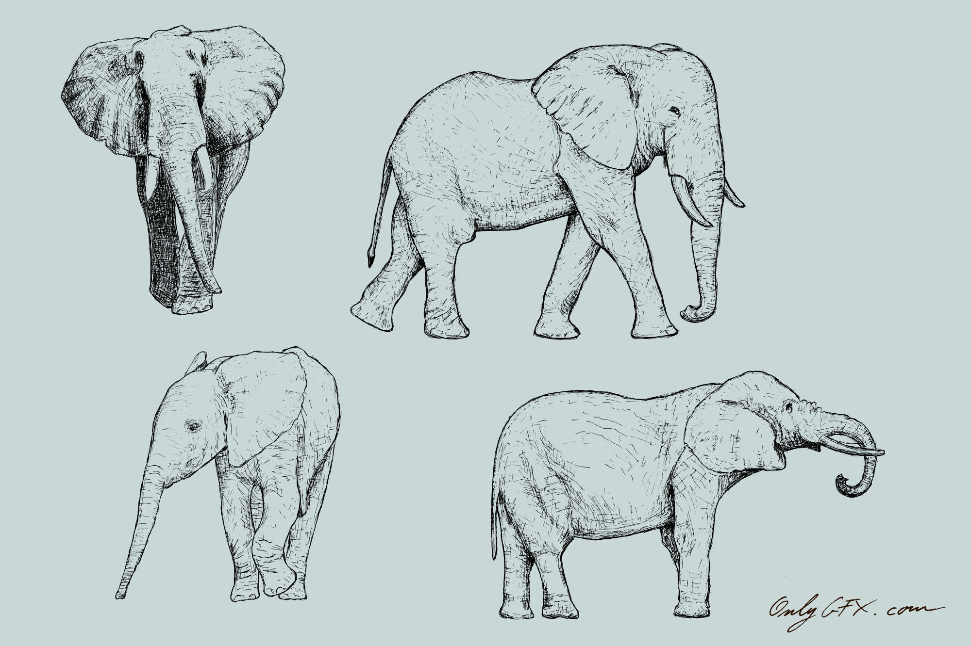 elephant-drawing-cover.jpg