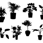 Pot Plant Silhouette (PNG Transparent)