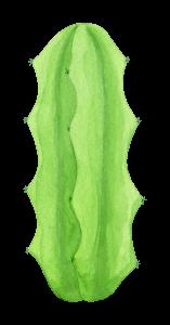 watercolor-cactus-5.png
