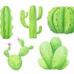 Watercolor Cactus (PNG Transparent)