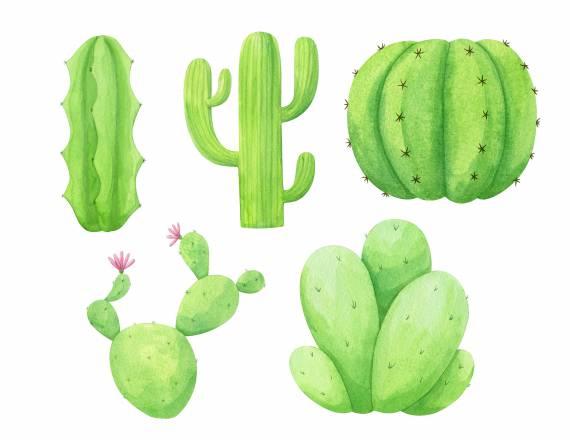 watercolor-cactus-cover.jpg