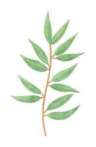 watercolor-eucalyptus-1.png
