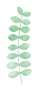 watercolor-eucalyptus-2.png